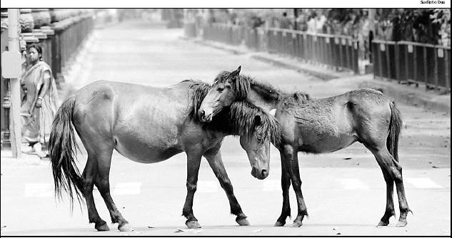 two-horses