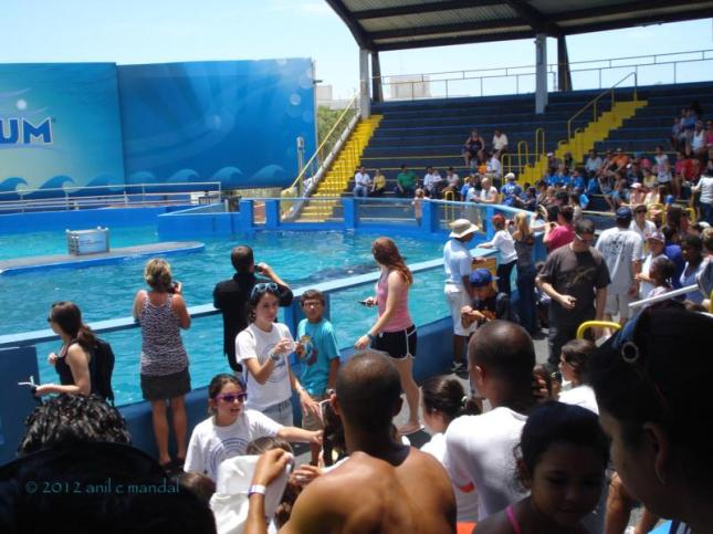 Gallery for whale show