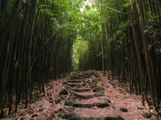 Photos That Will Inspire You To Travel-Bamboo_Forest_along_the_Pipiwai_Trail_Haleakala_National_Park_Maui_Hawaii
