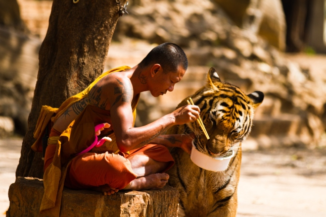 29-Photos-That-Will-Inspire-You-To-Travel-Tiger-Love