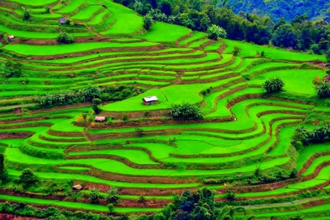 Phek, Nagaland, Ινδία