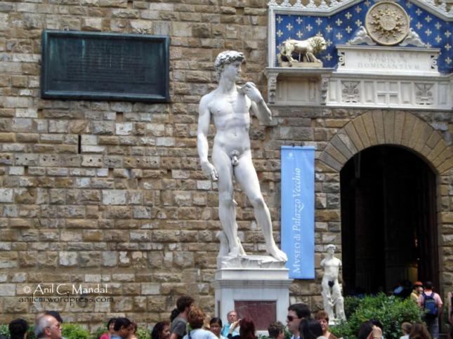 Florence David 1_800x600
