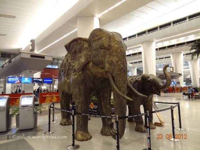 Indian Elephants_800x600
